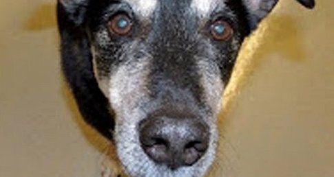 Frankie, il cane che fiuta il tumore alla tiroide