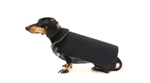 Cappotto per cani con LED - Fonte: DailyMail