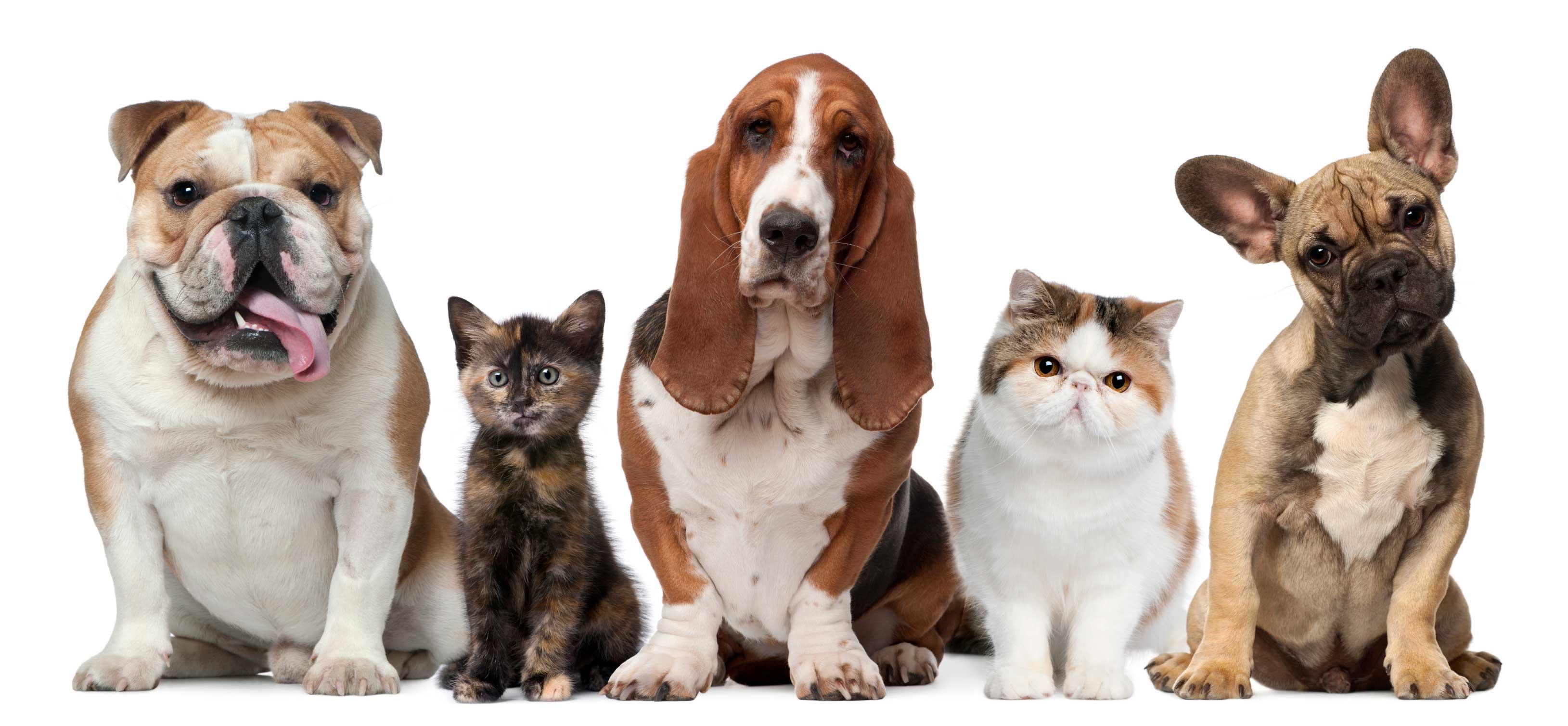 Scozia, una settimana di congedo per chi adotta cani e gatti