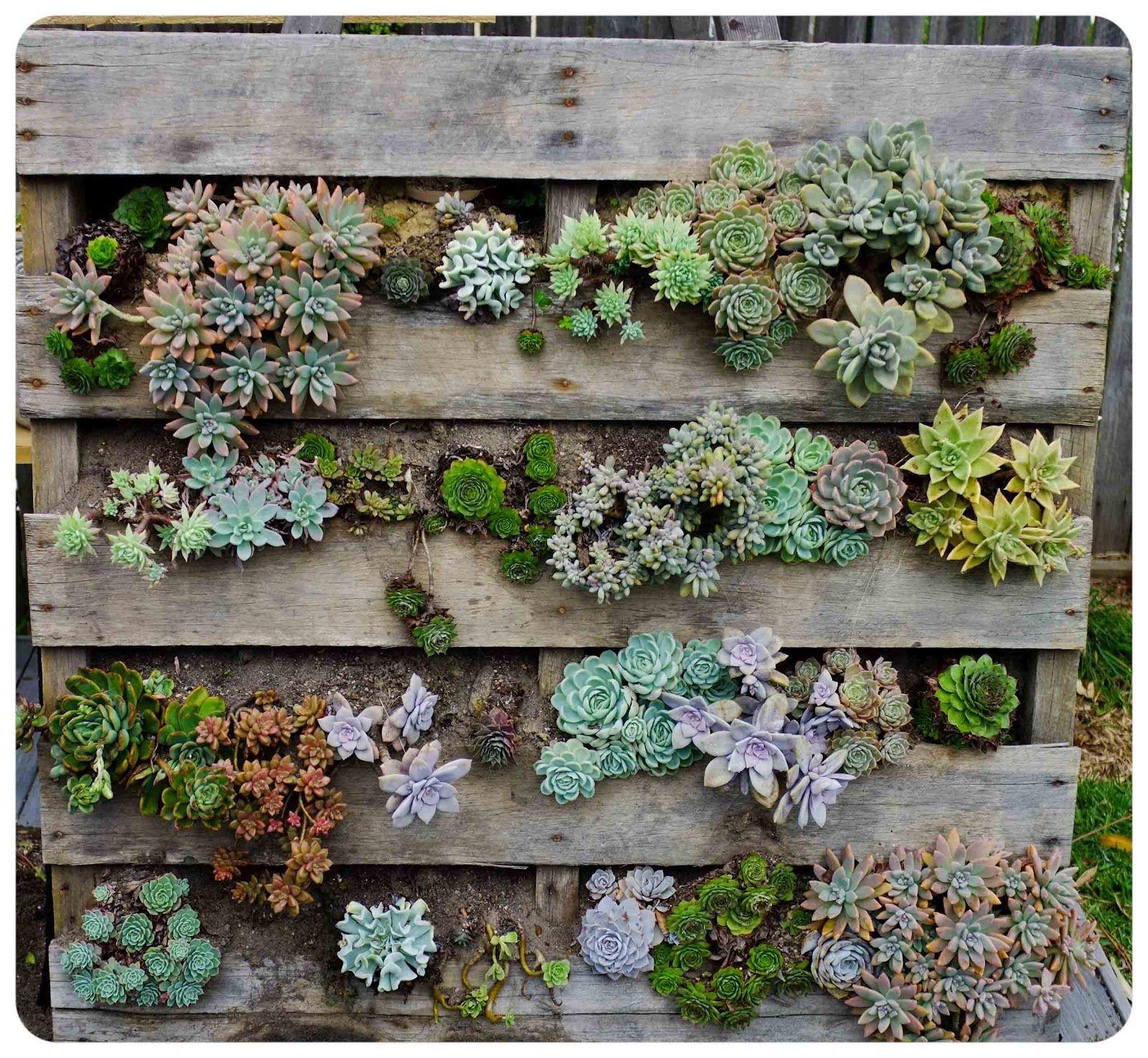 5 Idee Per Creare Bellissimi Giardini Verticali