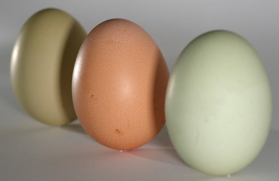 Eggs_green_brown_on_end