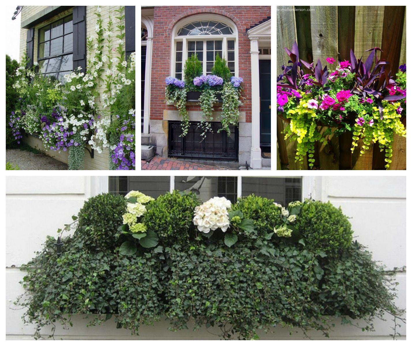 Fioriere da balcone come valorizzare piante e fiori in for Piante e fiori