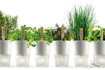 Quattro materiali per i vasi da giardino