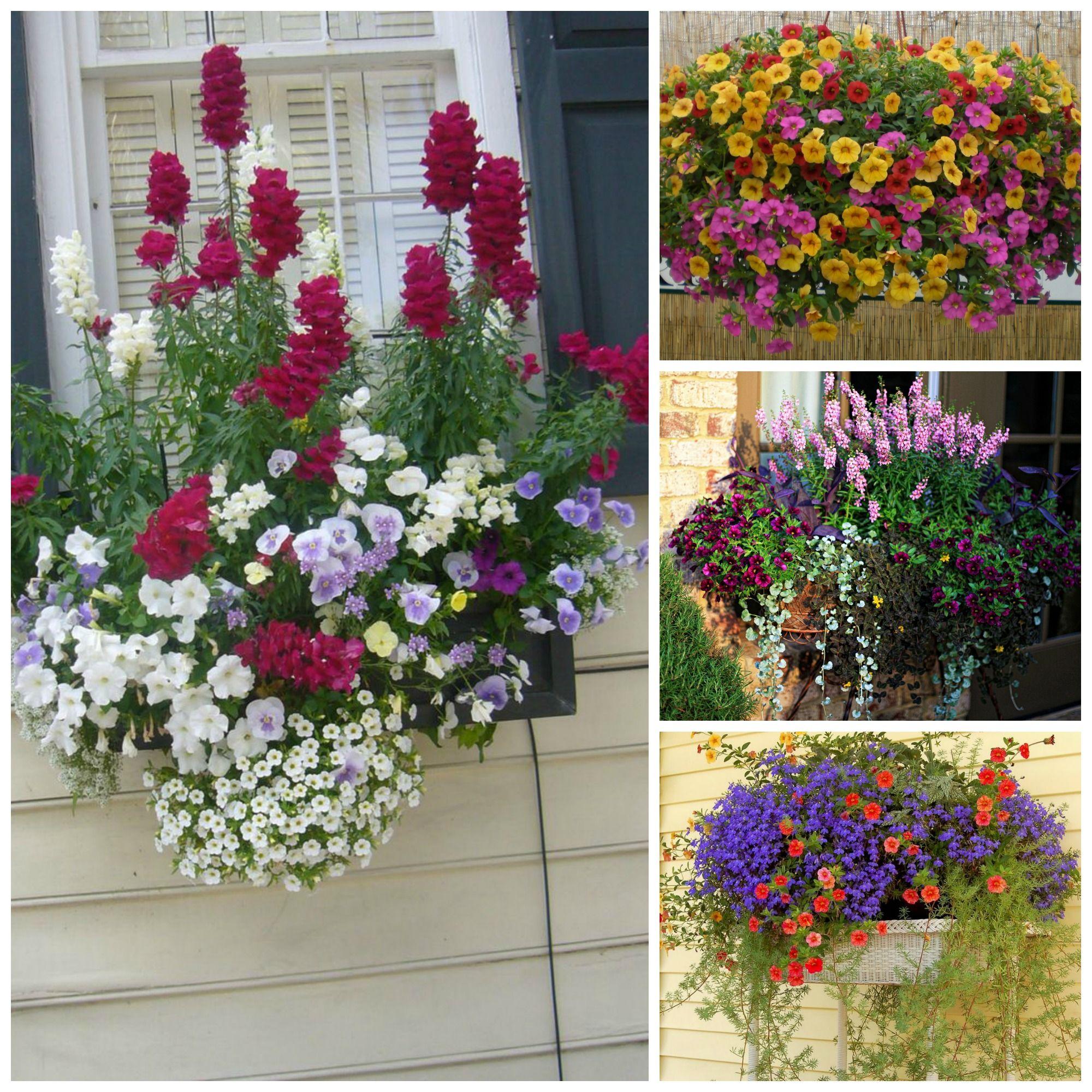 Fioriere da balcone come valorizzare piante e fiori in vaso bigodino - Piante da esterno in vaso ...