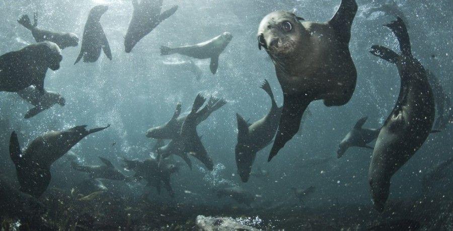 01-nuotare-foche