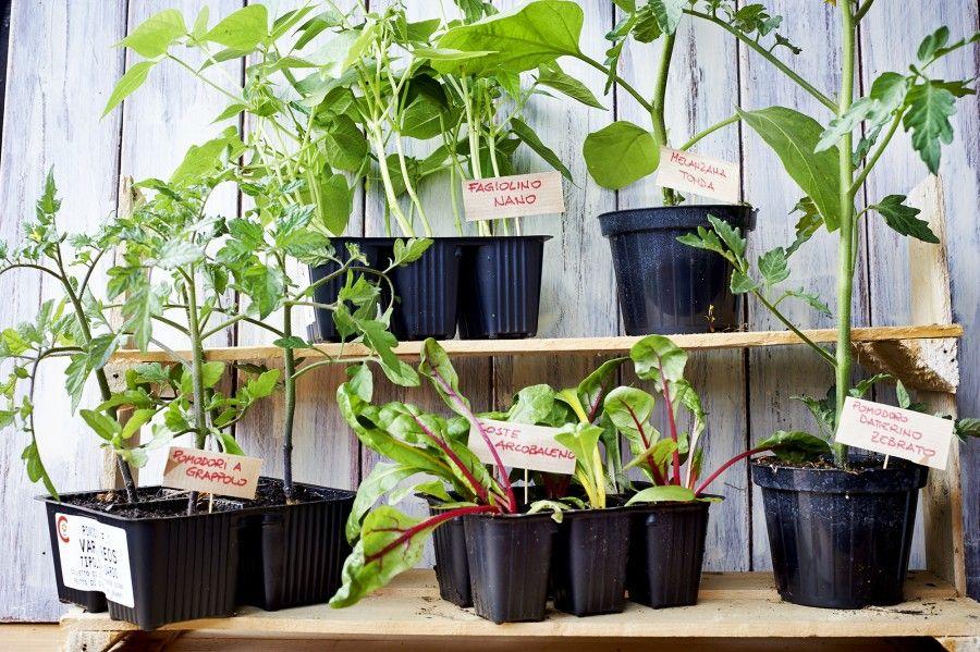 organizzare lo spazio per orto in terrazza