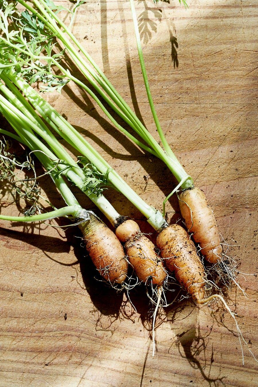 acqua per piante coltivate in orto
