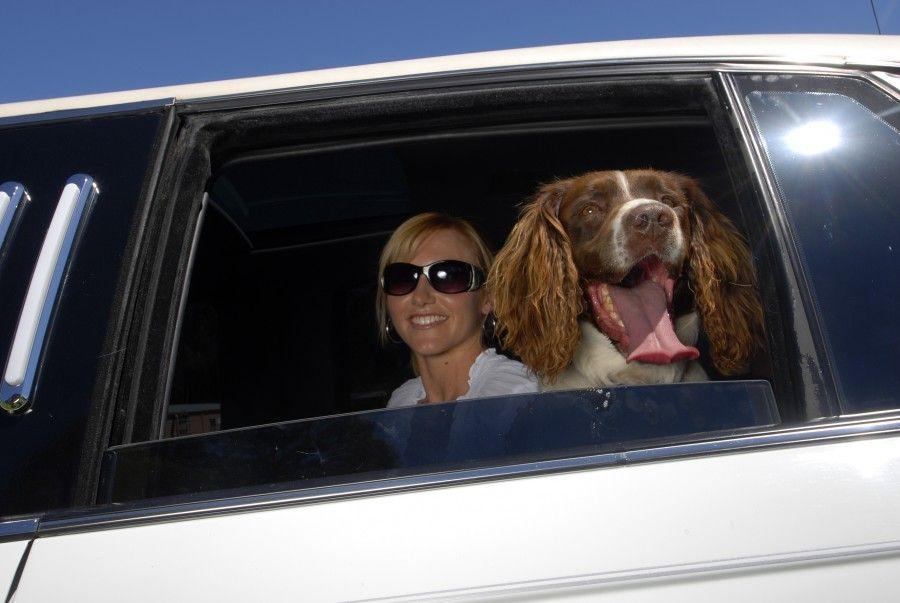 Hanrob Limousine Service