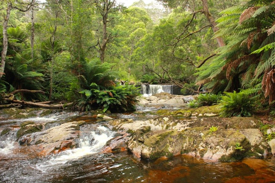 I Parchi Naturali della Tasmania