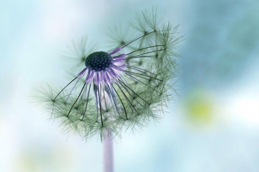 Rimedi contro l'allergia da polline