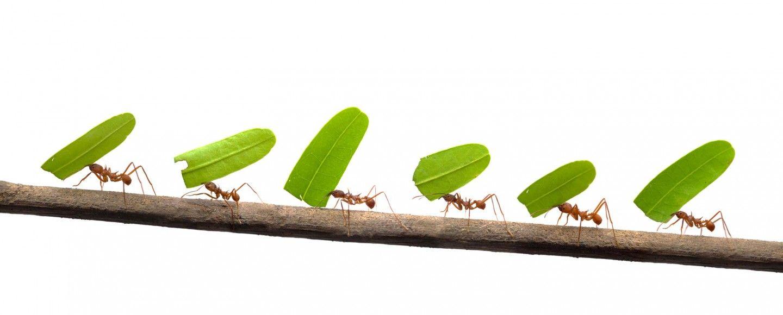 6 rimedi naturali contro le formiche bigodino for Rimedi naturali contro le formiche bicarbonato