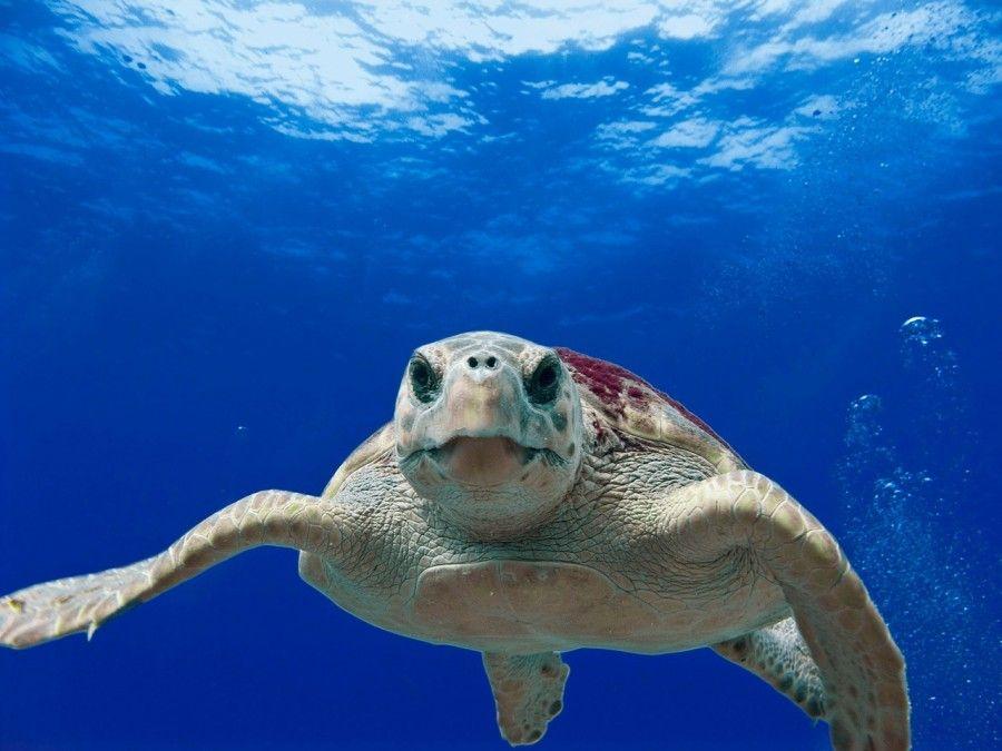 animali-esotici-10-tartarughe