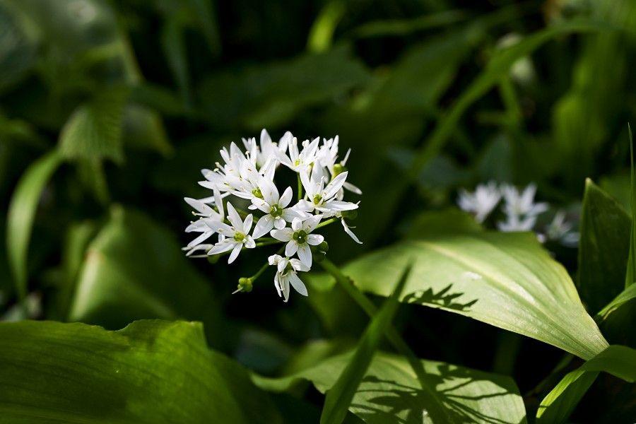 bigodino fiori eduli 4 copia