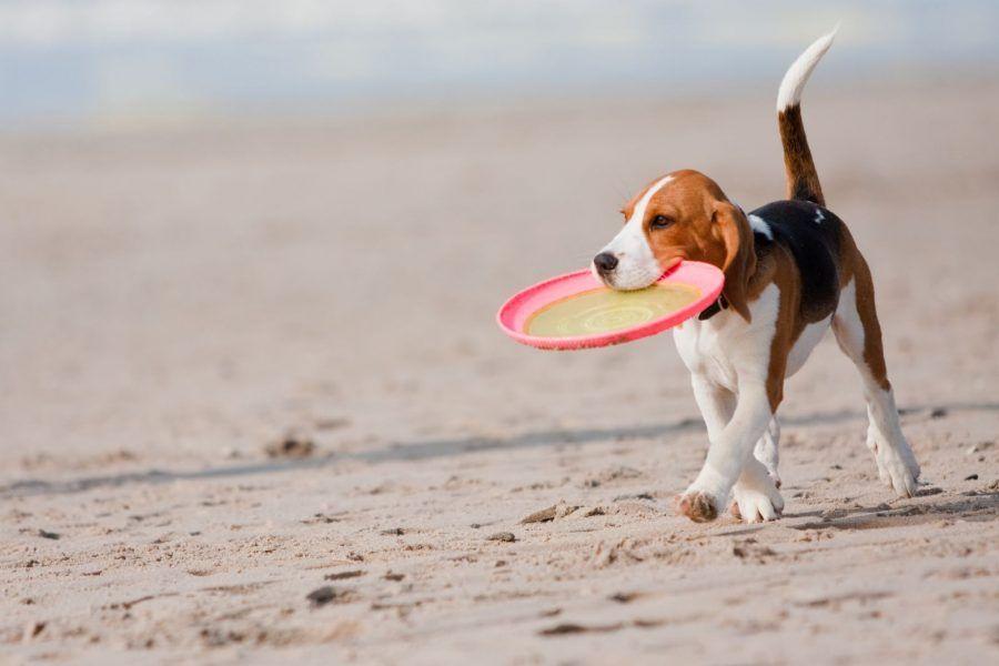 Gioca insieme al tuo amico a 4 zampe con il Frisbee, corri con lui e vedrai i risultati!