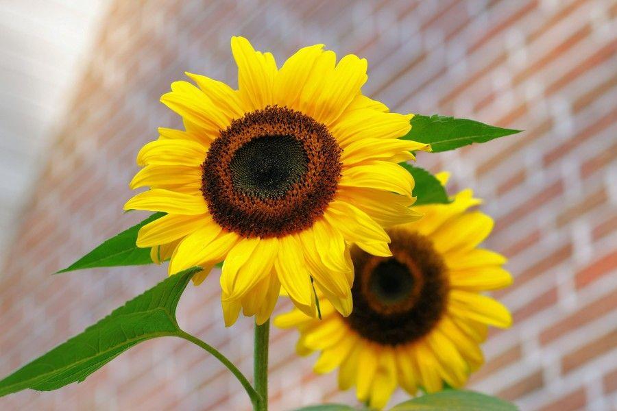 fiori (2)