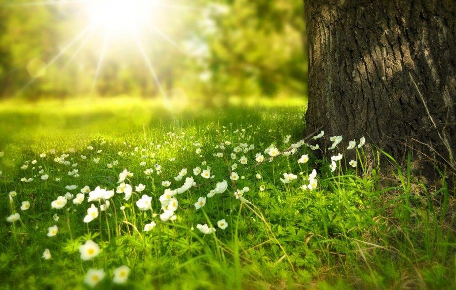 In Italia è record, 200 alberi per ogni abitante.