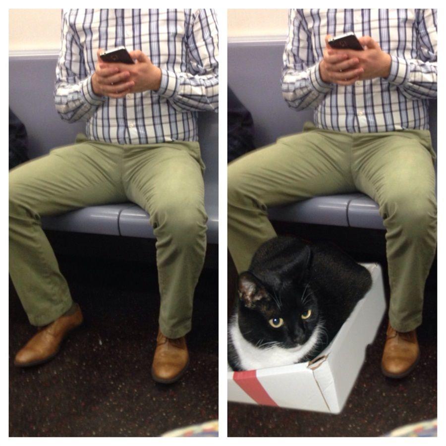 Saving room for cats il blog ironico contro i maleducati dei
