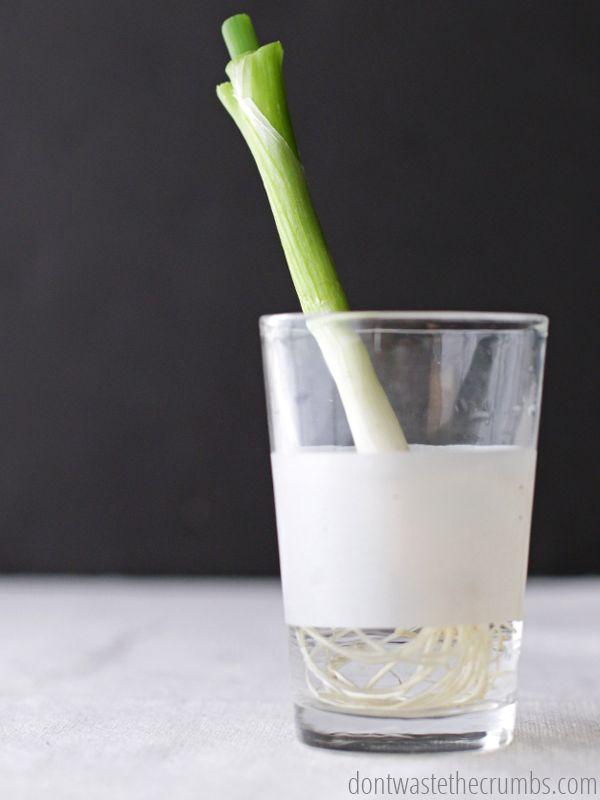 Foods-that-Regrow-in-Water_7