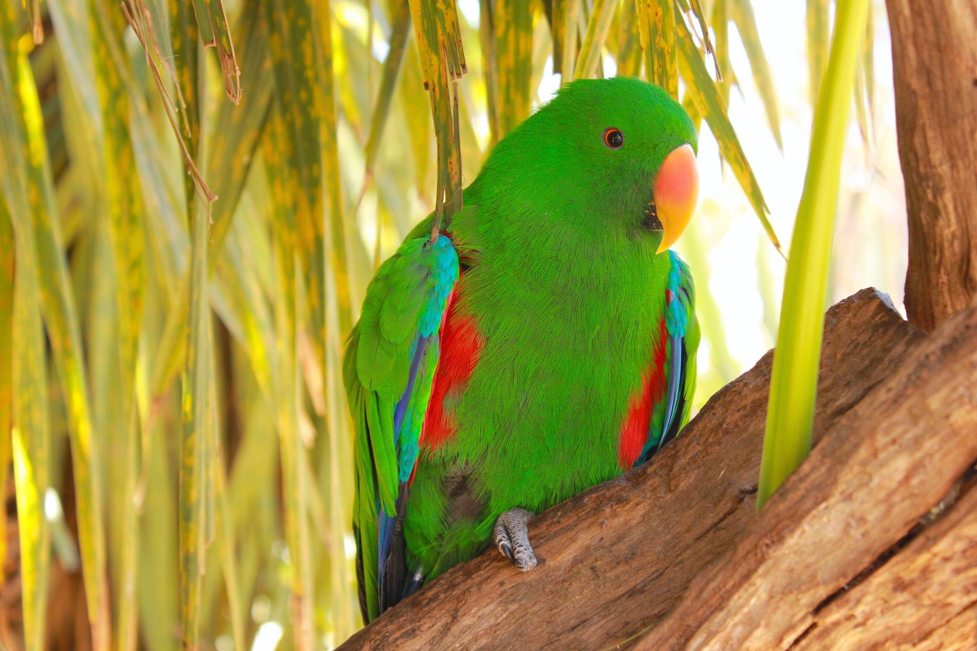 Uno dei coloratissimi pappagalli al Natureworld