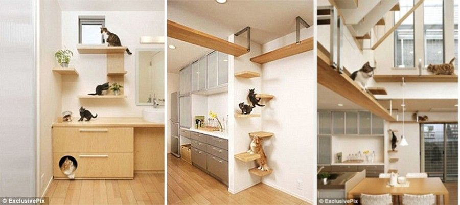 The cat-friendly house
