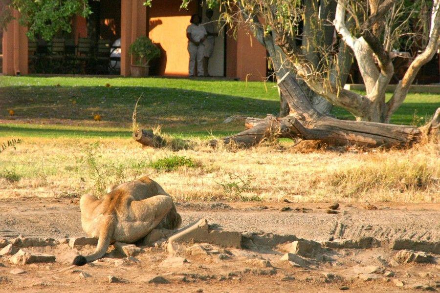 Safari in sudrafrica