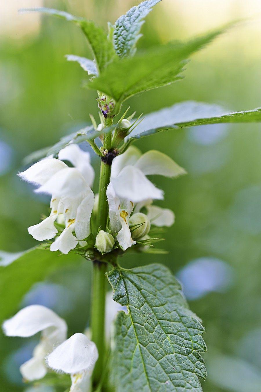 bigodino fiori eduli copia