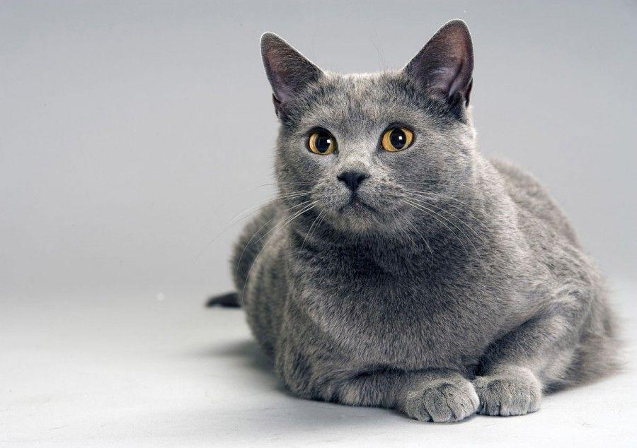 come-scegliere-il-gatto-adatto-alla-tua-personalita-381bio58778alta