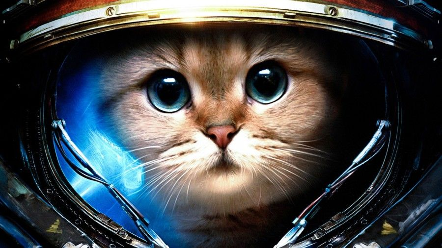 commander-kitty-has-saved-the-world