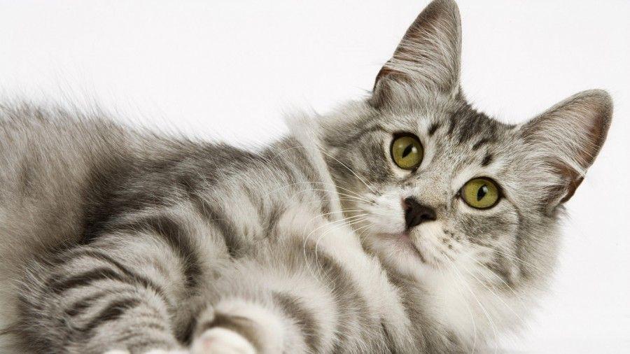 cute-wallpaper-animal-wallpapers