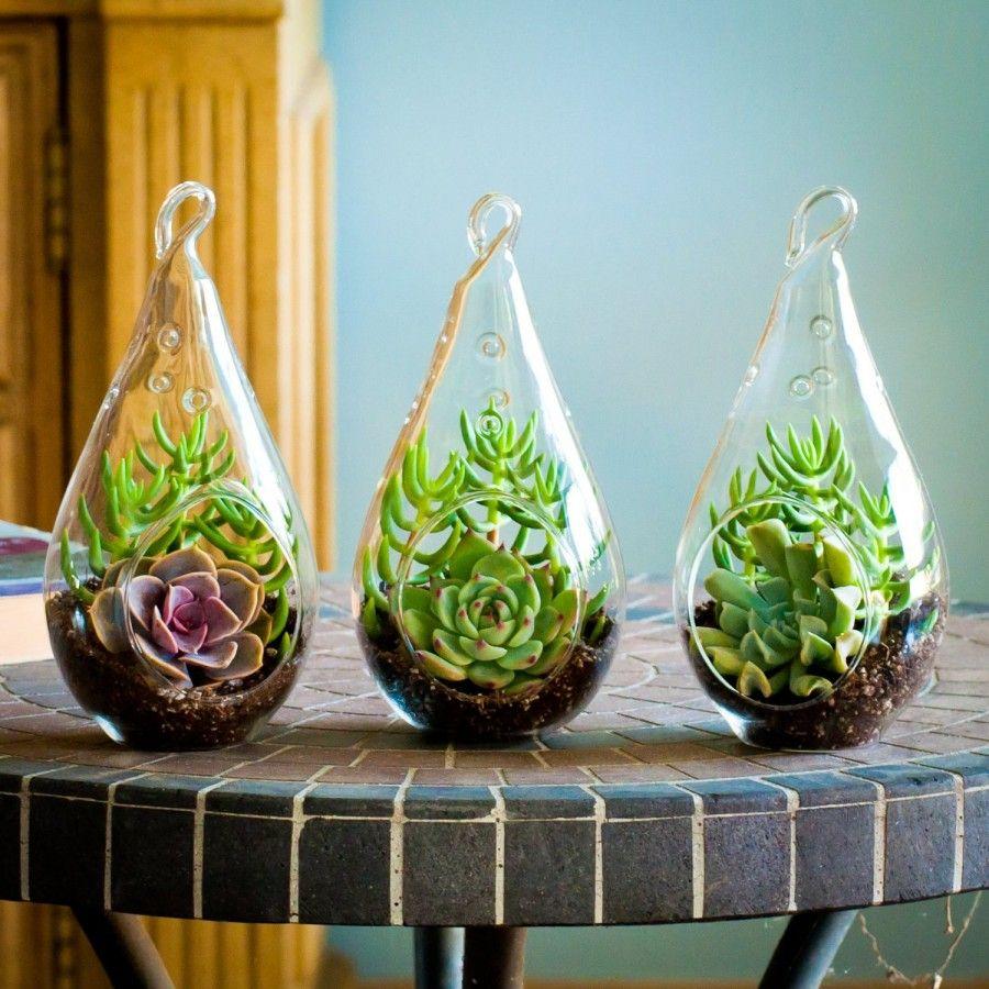 Terrario Per Piante Grasse diy: composizioni originali di piante grasse | bigodino