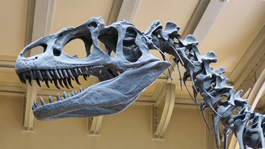 Scheletro di dinosauro