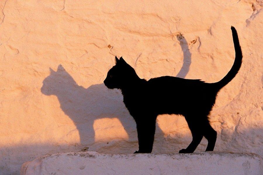 gatto-amicizia