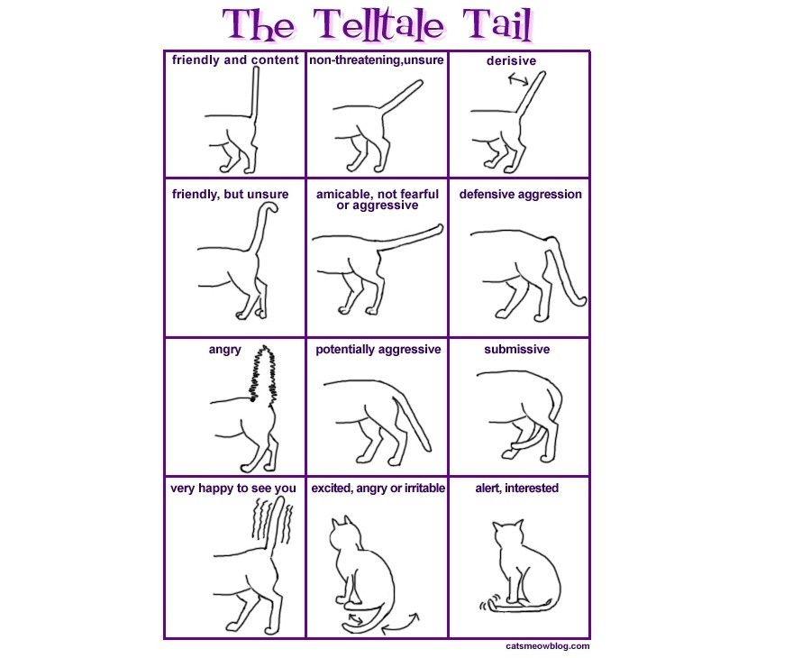 Come interpretare il linguaggio dei gatti bigodino for Il linguaggio dei gatti