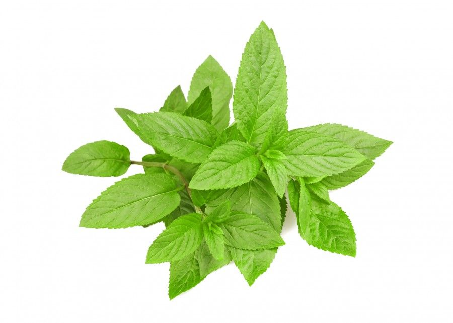 Mint bunch isolated on white