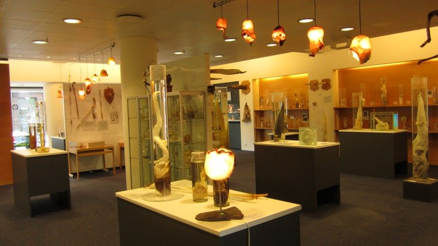The Icelandic Phallological Museum - Museo del Fallo