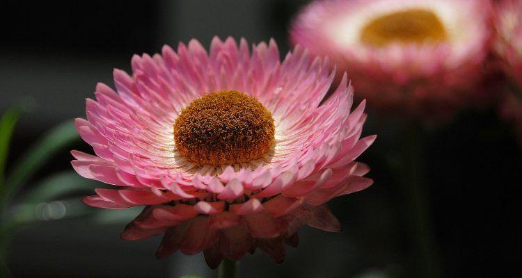 Le piante utili per tenere lontani gli insetti bigodino - Le piante grasse si possono tenere in casa ...