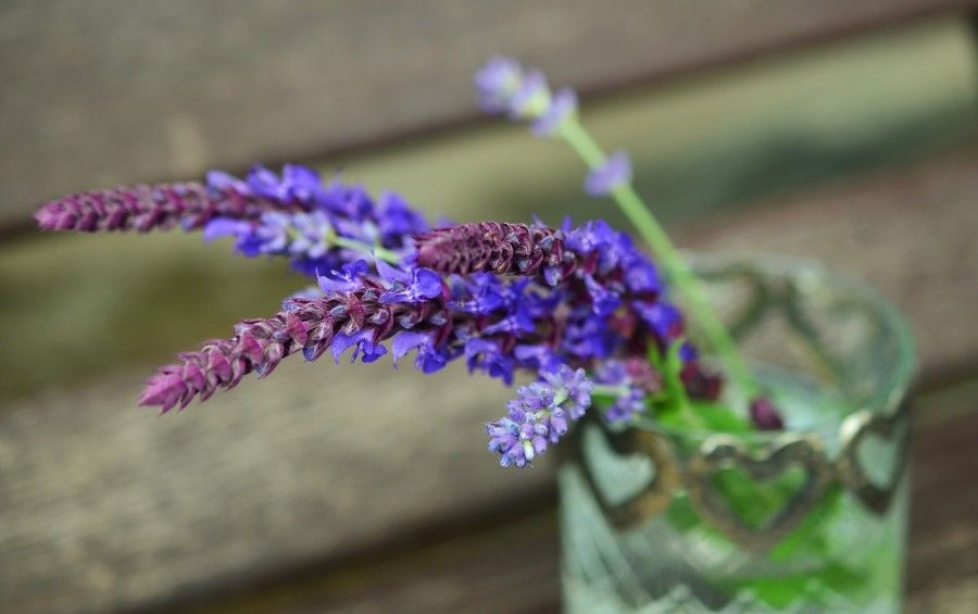 piante-contro-insetti-lavanda