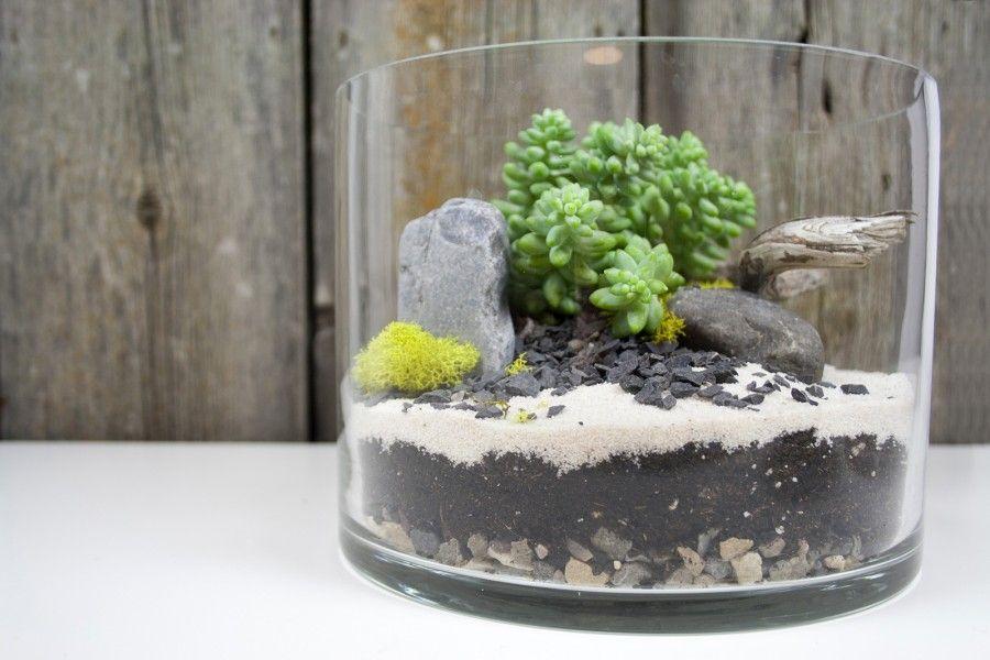 plant_terrarium_succulent06
