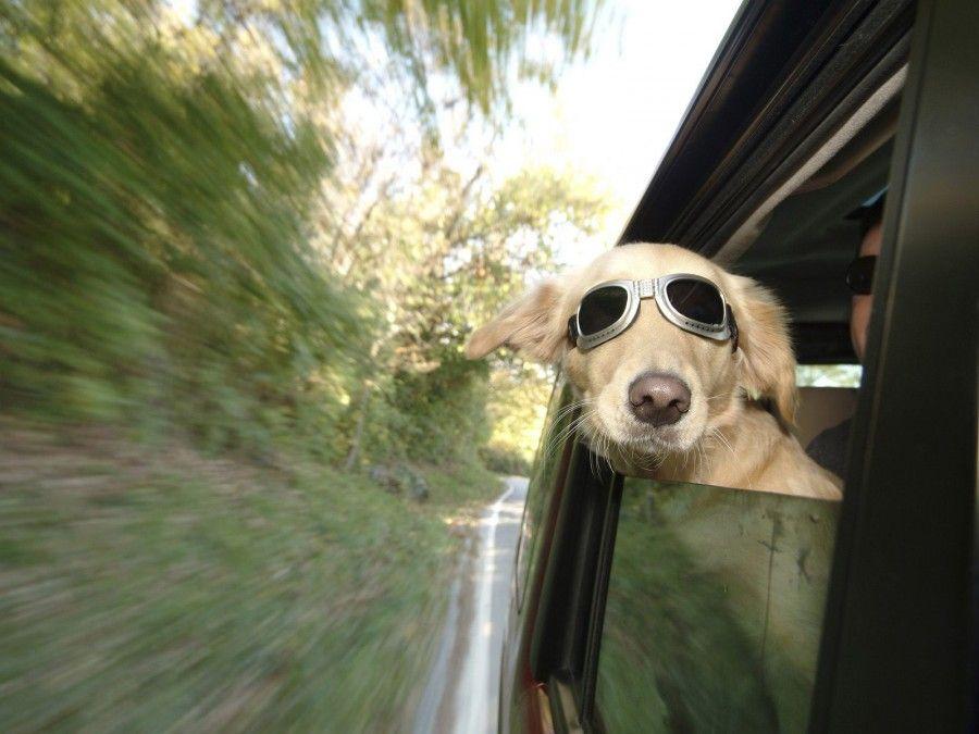 viaggiare-con-fido