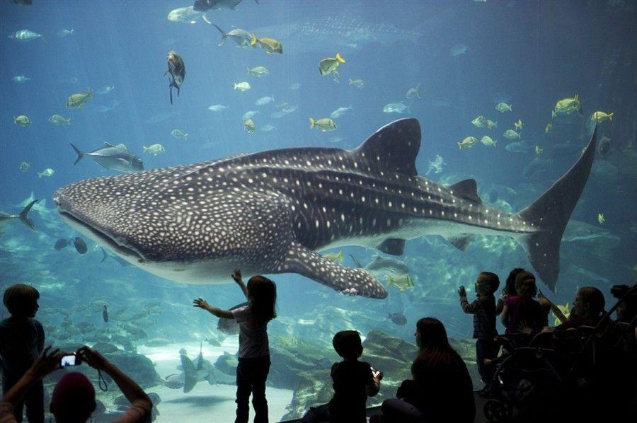 03Georgia Aquarium di Atlanta