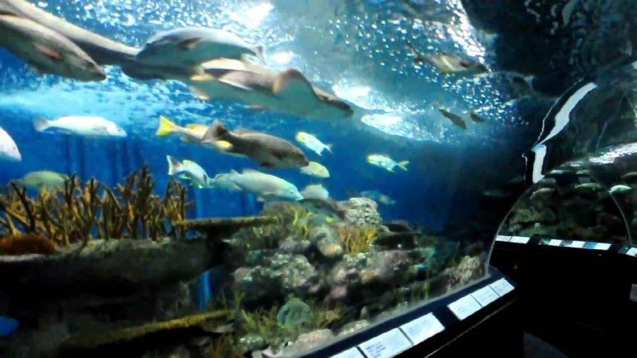 08Shanghai Ocean Aquarium