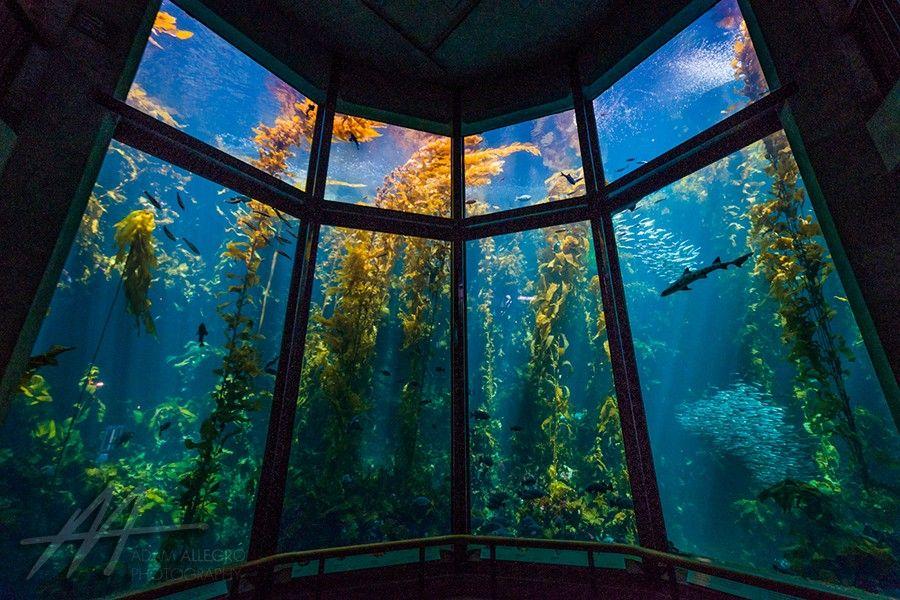 11Monterey Bay Aquarium