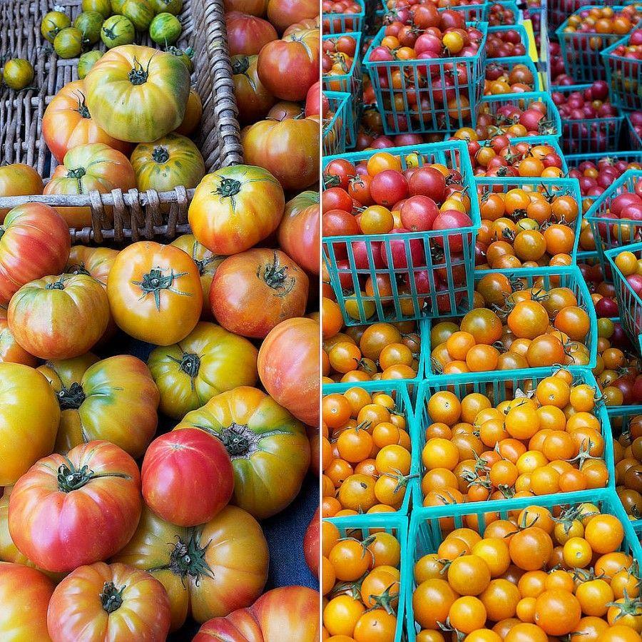pomodori grandi