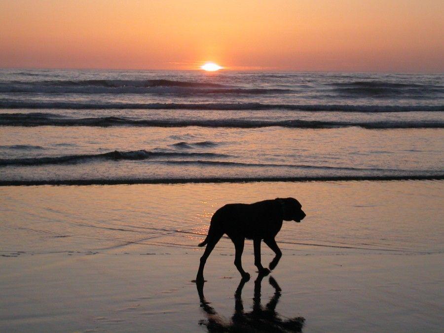 Oregon.2008.SunsetOnBeach.Keiko