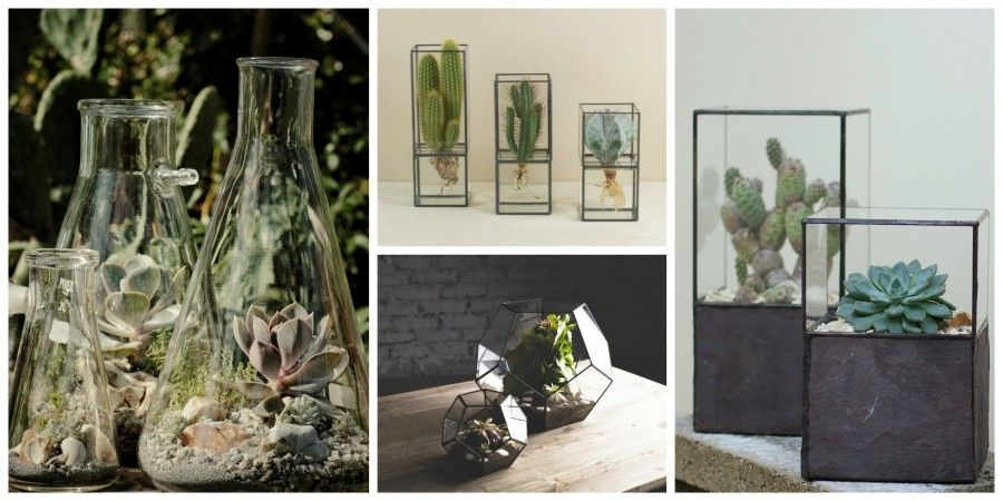 Passioni succulente bigodino for Vasi vetro design