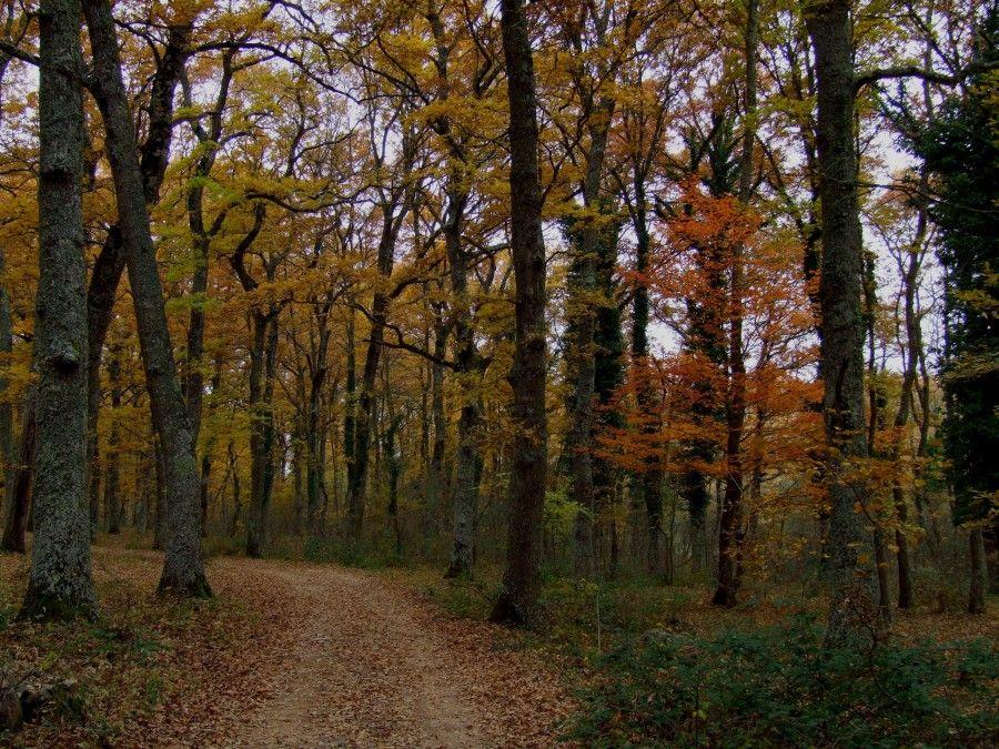 bosco-quarto-nel-parco-nazionale-gargano