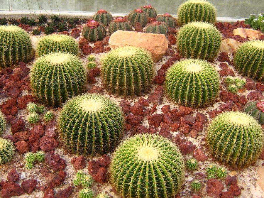 Cose da sapere sui cactus