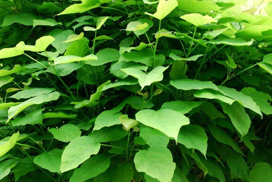 7 piante anti zanzara per il tuo balcone bigodino - Rimedi contro le zanzare in giardino ...
