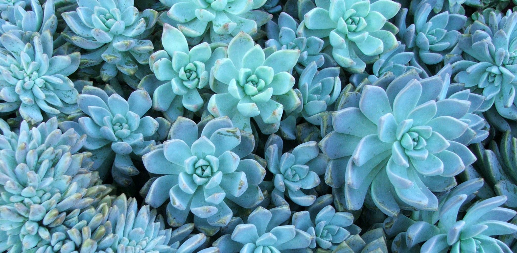 Passioni succulente!