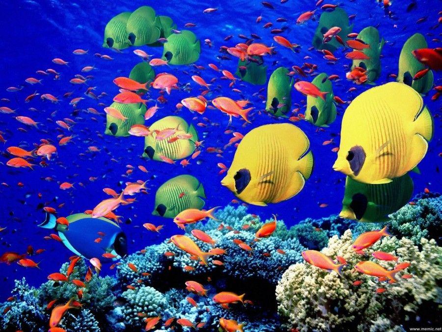 grande-barriera-corallina-australia1